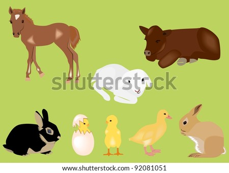 easter spring baby animals