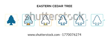 eastern red cedar tree vector