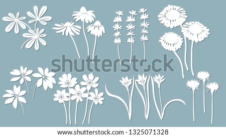 Echinacea, chamomile, schefler, noble hepatica, zephyrantes, stokesia. Vector illustration. Set of paper flower, stickers. LaseSet r cut. Set template for laser cutting and Plotter. Vector
