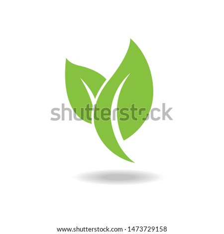 Eco green leaf icon isolated on white background . Vector illustration.