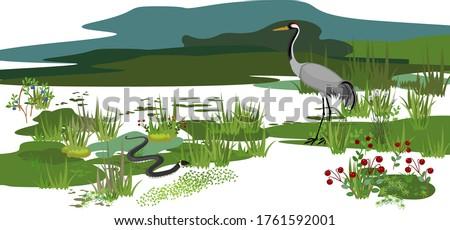Ecosystem of swamp. Different swamp inhabitants: animals and plants