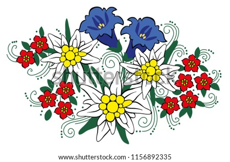 Edelweiss and alpine flowers