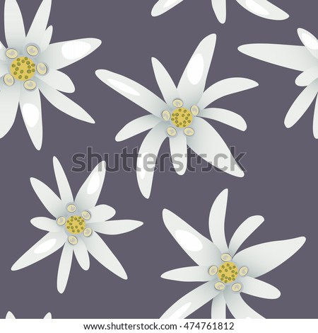 Edelweiss flowers.Seamless pattern. Vector illustration.