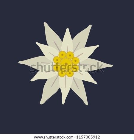 Edelweiss icon. Star shape national symbol of the Swiss Alpes, Mountain alpine blossom plant cartoon. High-mountainous silvery plant. Tourist logo template, banner background. Vector illustration