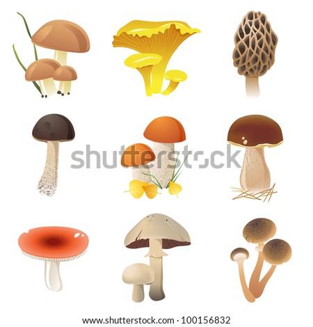 edible mushrooms icons set. EPS 10. File contains transparencies!