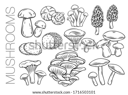 Edible mushrooms outline vector icons. Engraved forest plants, natural protein food. Drawn mushrooms for menu or shop design.