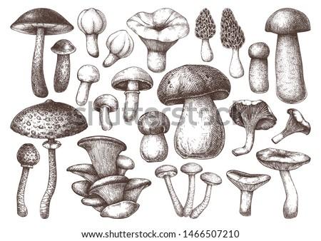 edible mushrooms vector