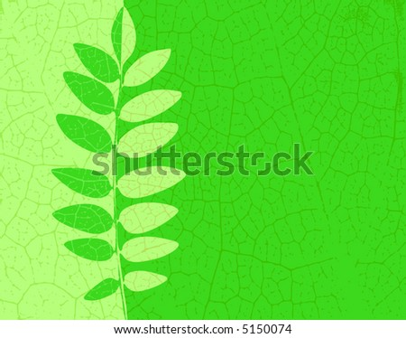 Editable vector illustration of an ash leaf with veins