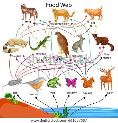 Education Chart of Biology for Food Web Diagram. Vector illustration