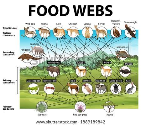 Education poster of biology for food webs diagram illustration Foto stock ©