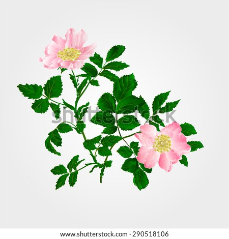 eglantine twig with leaves and