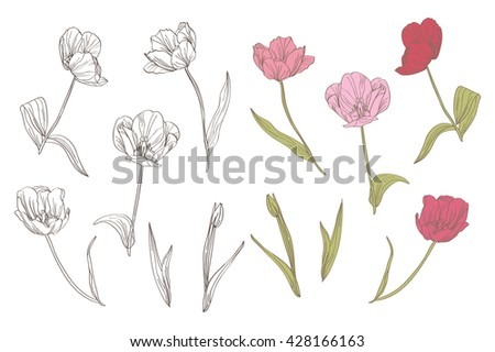 elegant decorative tulip