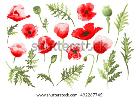 elegant decorative vector poppy