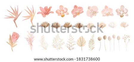 Elegant dry protea flower, tropic palm, pale orchid, eucalyptus, dried tropical leaves, floral elements. Trendy winter, autumn wedding bouquets, vintage decoration. Vector isolated illustration set ストックフォト ©