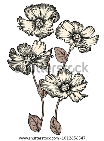 Elegant floral vector illustration of flowers. All elements of composition  in separated groups. Vector hand drown illustration in sketch style. Isolated on white background #1012656547