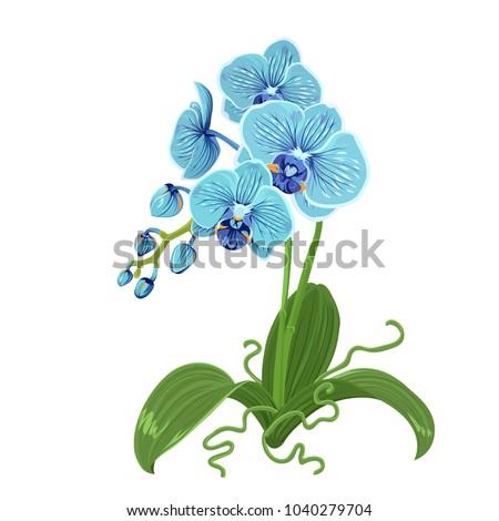 elegant gentle blue orchid