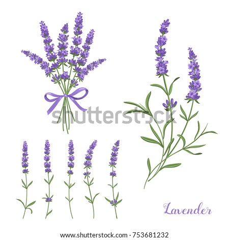 elegant lavender collection
