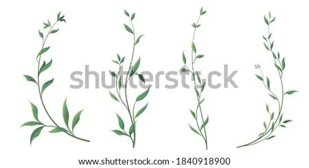 elegant thin twigs of plants