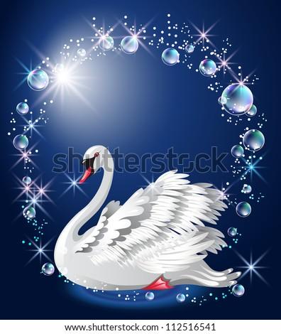 elegant white swan on blue