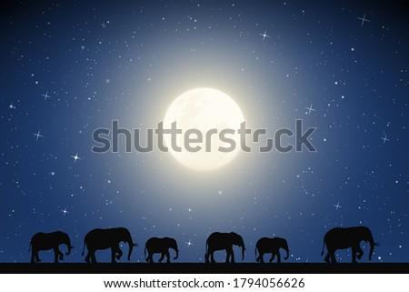 elephant family walking in