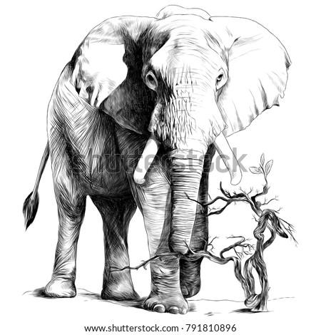elephant in full growth is in