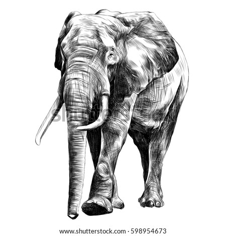 elephant in full growth, moving forward, sketch graphics vector black and white drawing