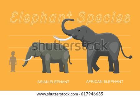 elephant sizes comparison