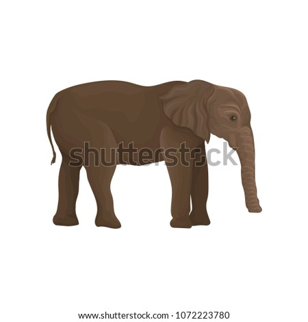 elephant wild animal  side view
