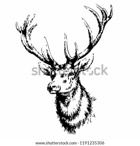 Elk head vector
