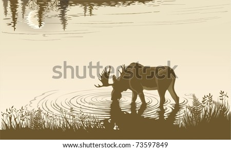 Elk in the drinking water - stock vector