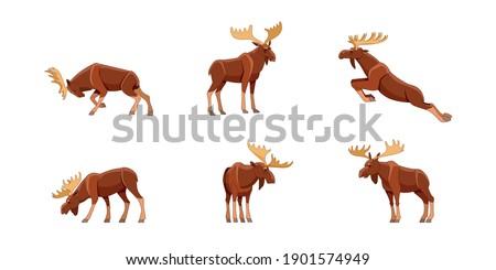 elk or bull moose wild animal