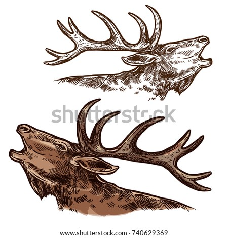 Elk or moose head and antlers sketch vector icon. Wild forest stag deer buck isolated wildlife fauna and zoology symbol for blazon or hunting sport team trophy and nature adventure club