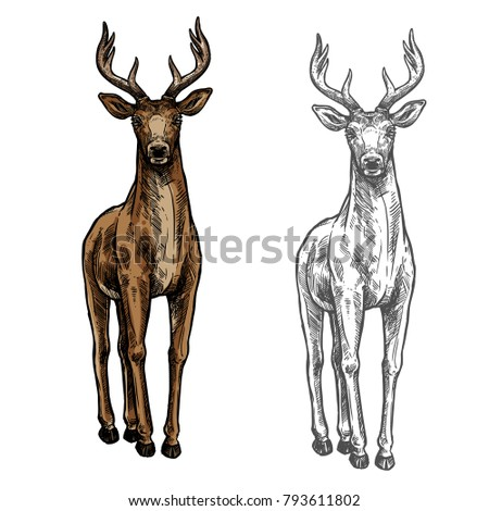 elk wild animal sketch vector...