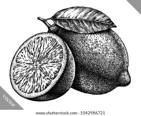 engrave isolated lemon hand