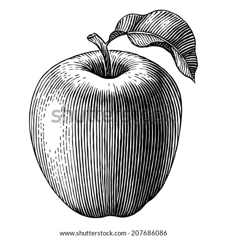 engraved illustration of an