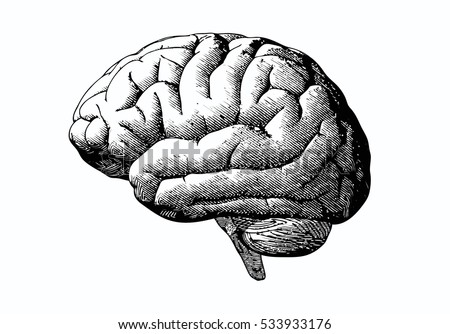 Engraving brain illustration in gray scale monochrome color on white background