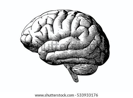 engraving brain illustration in