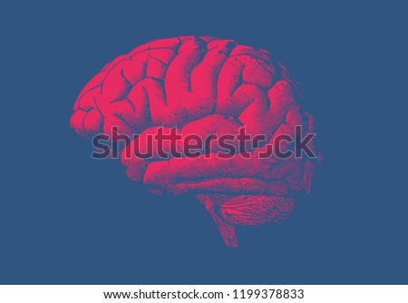 Engraving drawing bright red human brain side view illustration isolated on dark blue background