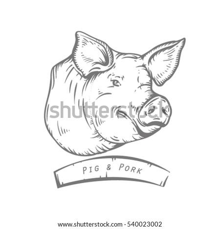 engraving head of pig sketch