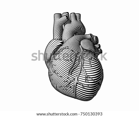 Engraving human heart with monochrome flow line art stroke isolated on white BG