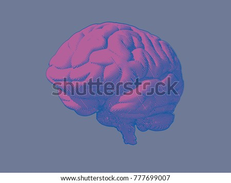 Engraving pink brain in oblique perspective view isolated on blue gray background
