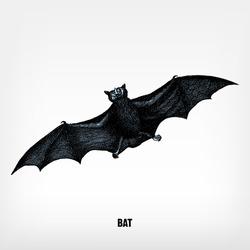 Engraving vintage Bat from