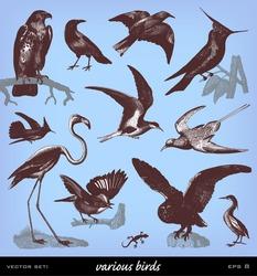 Engraving vintage bird set from