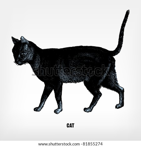 engraving vintage cat from