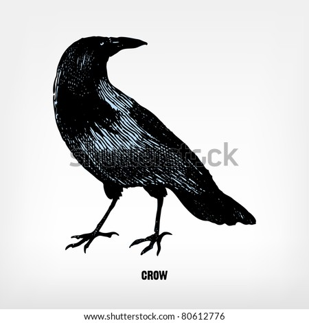 engraving vintage crow from ...