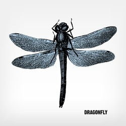 Engraving vintage Dragonfly from