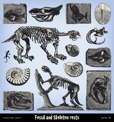 Engraving vintage fossil and skeleton set from