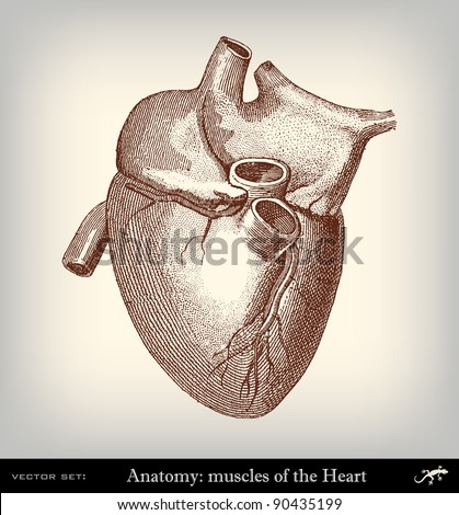 "Engraving vintage heart from ""The Complete encyclopedia of illustrations"" containing the original illustrations of The iconographic encyclopedia of science, literature and art, 1851. Vector."