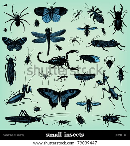 engraving vintage insect set