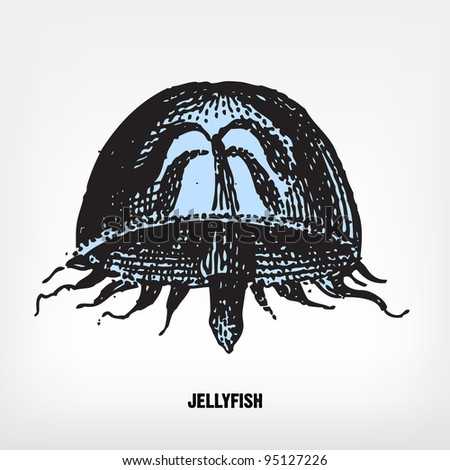 Vintage jellyfish illustration - photo#36